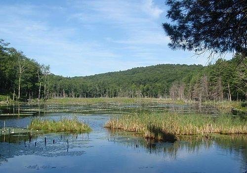 Graceful Swamp