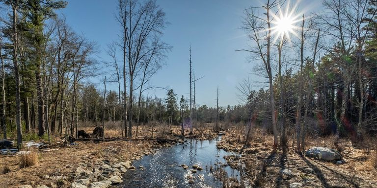 Robbins Brook is a great marshy area providing ideal habitat for a variety of ducks and wildlife on the newly conserved Hillis property.