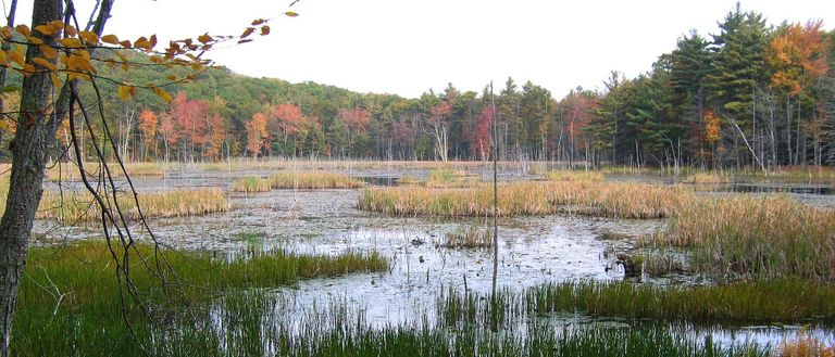 Marsh in the fall