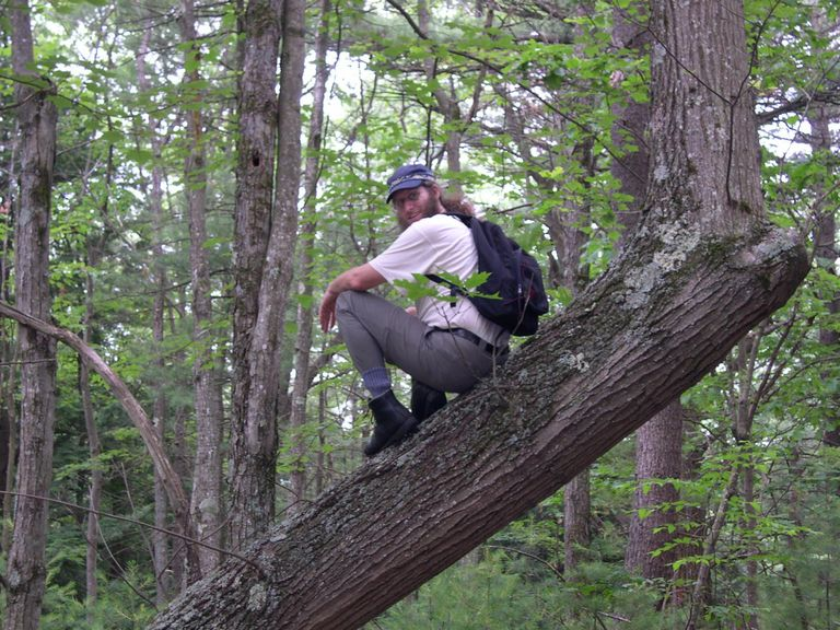 Aaron on cool tree at Fern Glenn Conservation Area in Winchendon